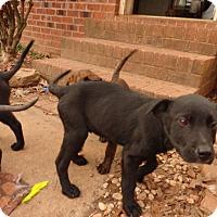 Adopt A Pet :: Sadie - Warrenton, NC