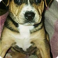 Adopt A Pet :: Una - Redding, CA