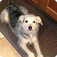 Adopt A Pet :: Jersey (2016) - Rochester, MN
