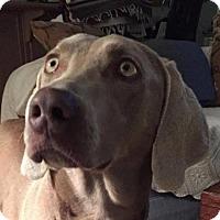Adopt A Pet :: Gypsy - Birmingham, AL