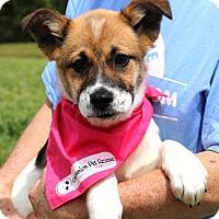 Adopt A Pet :: Angelica~ meet me! - Glastonbury, CT