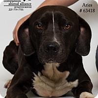 Adopt A Pet :: Aries - Baton Rouge, LA