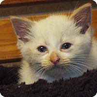 Adopt A Pet :: Archie - Shelby, MI
