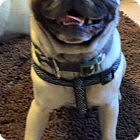 Adopt A Pet :: Buddy - Cordova, TN