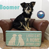 Adopt A Pet :: Hold - Boomer - Arcadia, FL