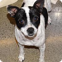 Adopt A Pet :: Louise - Tacoma, WA
