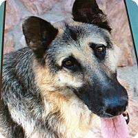 Adopt A Pet :: CHASE VON KELBRA - Los Angeles, CA