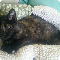 Adopt A Pet :: Cleo-is blind in 1 eye - Media, PA