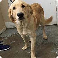 Adopt A Pet :: 5471 - Calhoun, GA