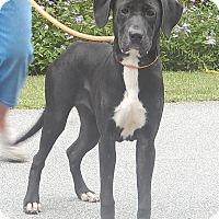 Adopt A Pet :: Jesse - Newport, NC