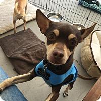 Adopt A Pet :: Otello - Las Vegas, NV