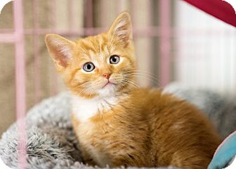 Cat Rescue Montclair Ca