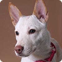 Adopt A Pet :: Empress - Sudbury, MA