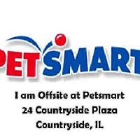 Adopt A Pet :: BE - Chicago Ridge, IL