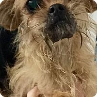 Adopt A Pet :: Miss Puggie - Oswego, IL