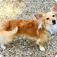 Adopt A Pet :: Buddy Bailey - Houston, TX