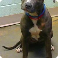 Adopt A Pet :: Mahala - Decatur, GA