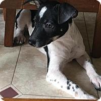 Adopt A Pet :: Ethan - Round Lake Beach, IL