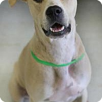 Adopt A Pet :: Cal - Yukon, OK