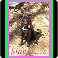Adopt A Pet :: STAR - Milton, GA