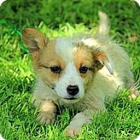 Adopt A Pet :: Holden - Staunton, VA