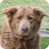 Adopt A Pet :: Roberta - New Boston, NH