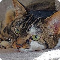 Adopt A Pet :: Grace - Victor, NY