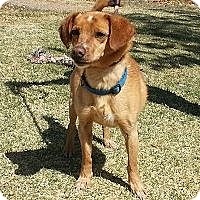 Adopt A Pet :: Bubba - Alamogordo, NM