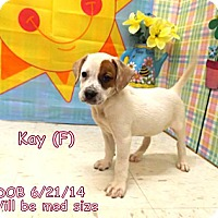 Adopt A Pet :: Kay - South Jersey, NJ