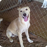 Adopt A Pet :: Yuma (located in Mesa AZ) - Cranston, RI