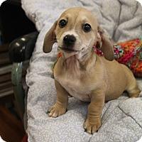 Adopt A Pet :: Sparky - Marietta, GA
