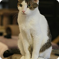 Adopt A Pet :: Eddie - Columbia, MD