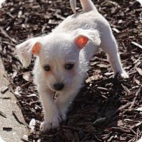 Adopt A Pet :: Drift - La Habra Heights, CA