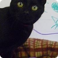 Adopt A Pet :: Glenda - Hamburg, NY