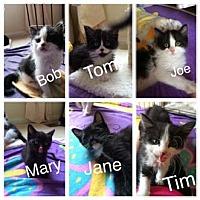 Adopt A Pet :: Bob - Merrifield, VA