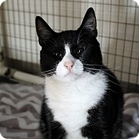 Adopt A Pet :: Verity - Chicago, IL