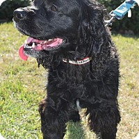 Adopt A Pet :: Taylor - Houston, TX