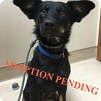 Adopt A Pet :: SHIMANO - Winnipeg, MB