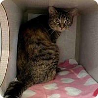 Adopt A Pet :: SNIPS - Canfield, OH