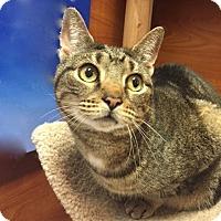 Adopt A Pet :: Zebra - Long Beach, NY