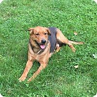 Adopt A Pet :: Hoss - Louisville, KY