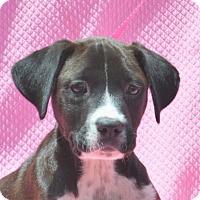 Adopt A Pet :: **ELLA** MEET JUNE 25TH! - Mukwonago, WI