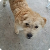 Adopt A Pet :: Hank-(RC) - Santa Ana, CA