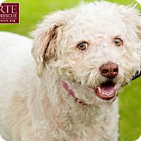 Adopt A Pet :: Curly - Marina del Rey, CA