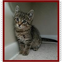 Adopt A Pet :: Pepe - Mt. Prospect, IL
