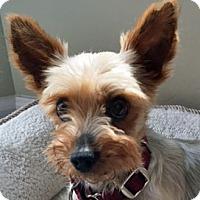 Adopt A Pet :: Chloe - St Louis, MO
