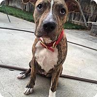 Adopt A Pet :: Jessa - San Diego, CA