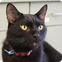 Adopt A Pet :: Sammy - Indianapolis, IN