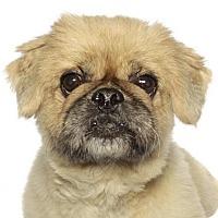 Adopt A Pet :: Terry - Oakland Park, FL