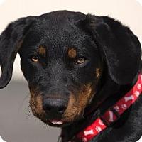 Adopt A Pet :: BART aka BEAUX - Pt. Richmond, CA